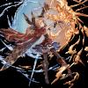 【グラブル】火キャラ唯一のディープ持ちクラリス がおーパのクラリスの利点はデバフ命中率もそうだけどレイジⅣを積める事?